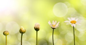 Psychotherapy Counselling for children Tunbridge Wells